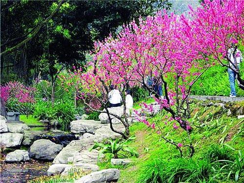 沿着山坡,丛丛桃花树在山谷里盛放,整个桃花涧成了粉红色的世界.