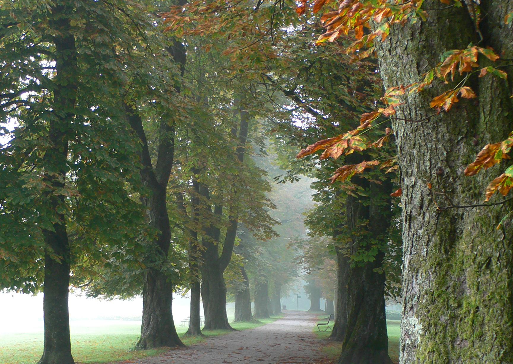 萨尔斯堡郊区的秋天